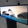 Painel de Led P5 Full Color 200cm x 72cm Para Publicidade com Vídeos